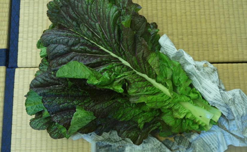 高菜の炊いたん – 高菜の葉のレシピ