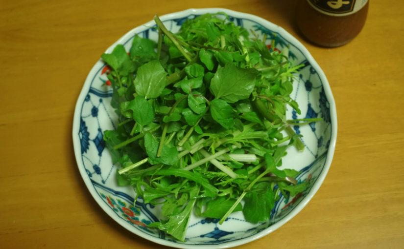 葉野菜を美味しく保存する方法