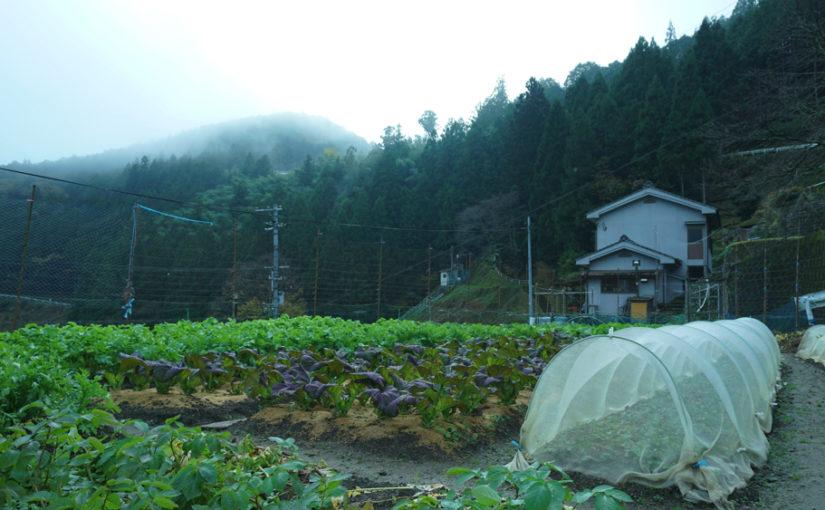 熊野野菜 生産者 下湯川に住む蔭地さん