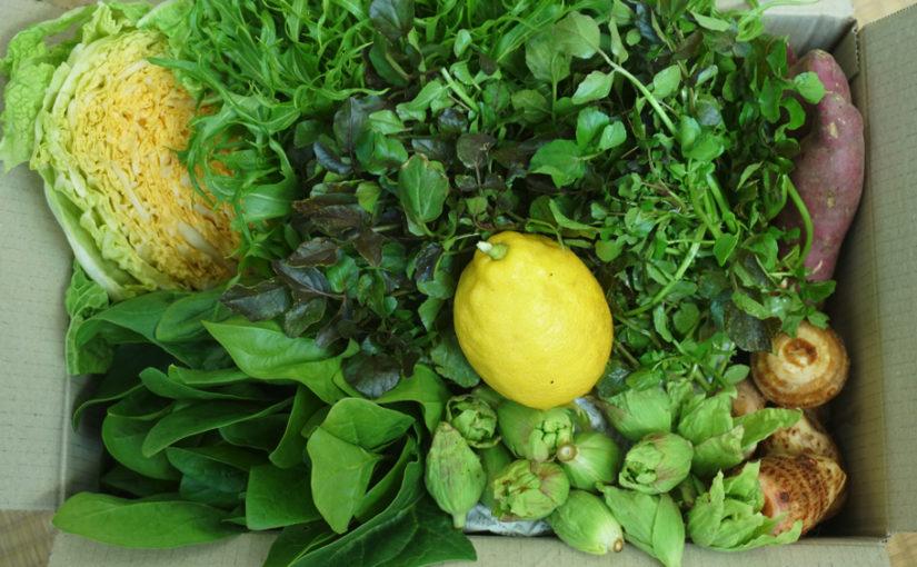 2月3日、節分の日の熊野野菜セレクトボックスは?