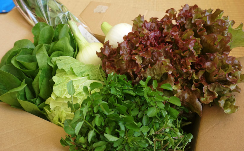 4月28日発送分 熊野野菜セレクトボックスの内容は?